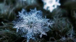Zoom-flocons-de-neige-1